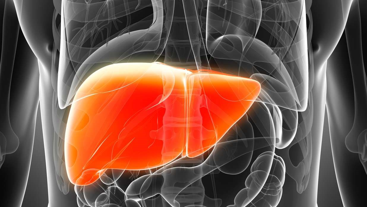 Dietary Fructose Causes Liver Damage in Animal Model