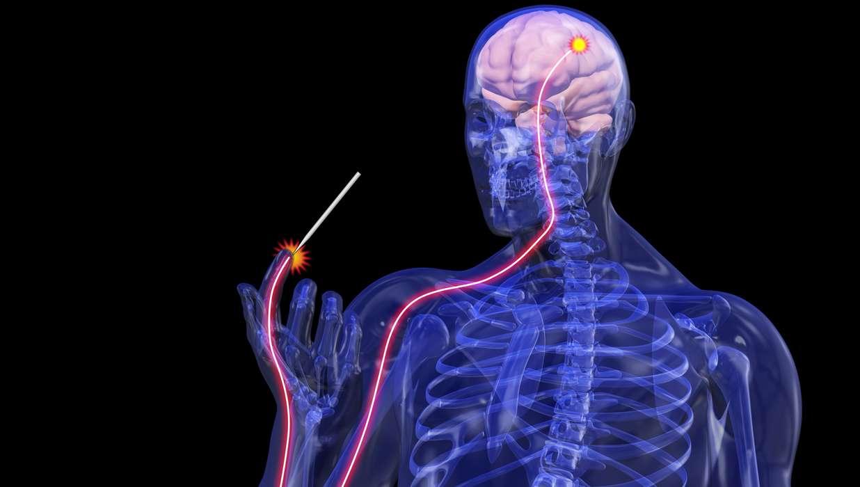 (PDF) Hereditary sensory and autonomic neuropathies: Types ...  Hereditary Sensory And Autonomic Neuropathy