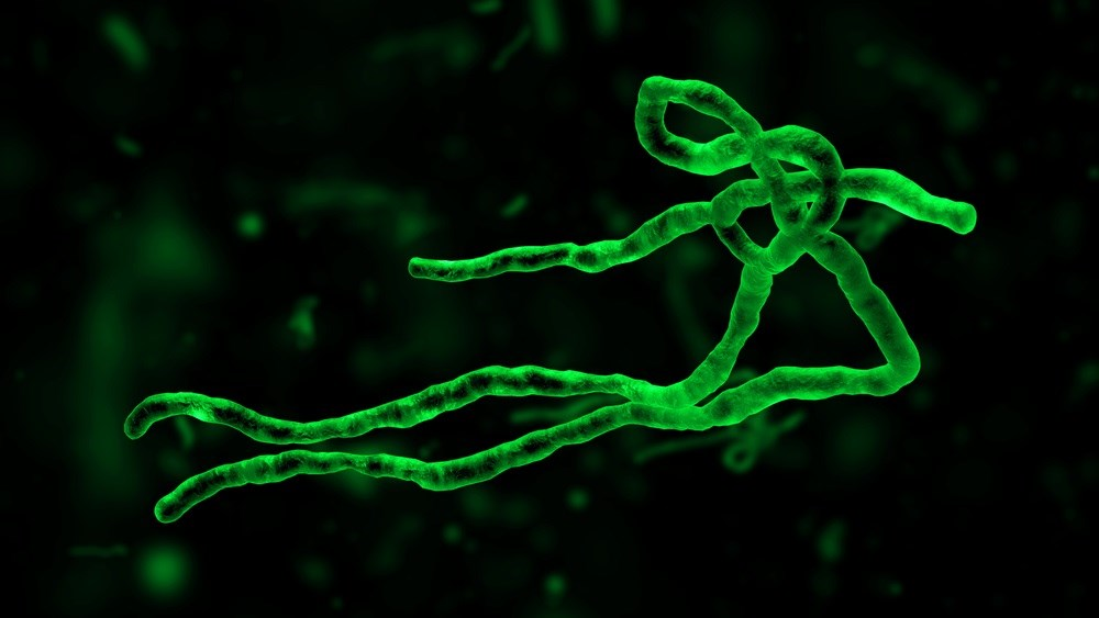 Ebola Vaccine Immune Responses Persist After One Year