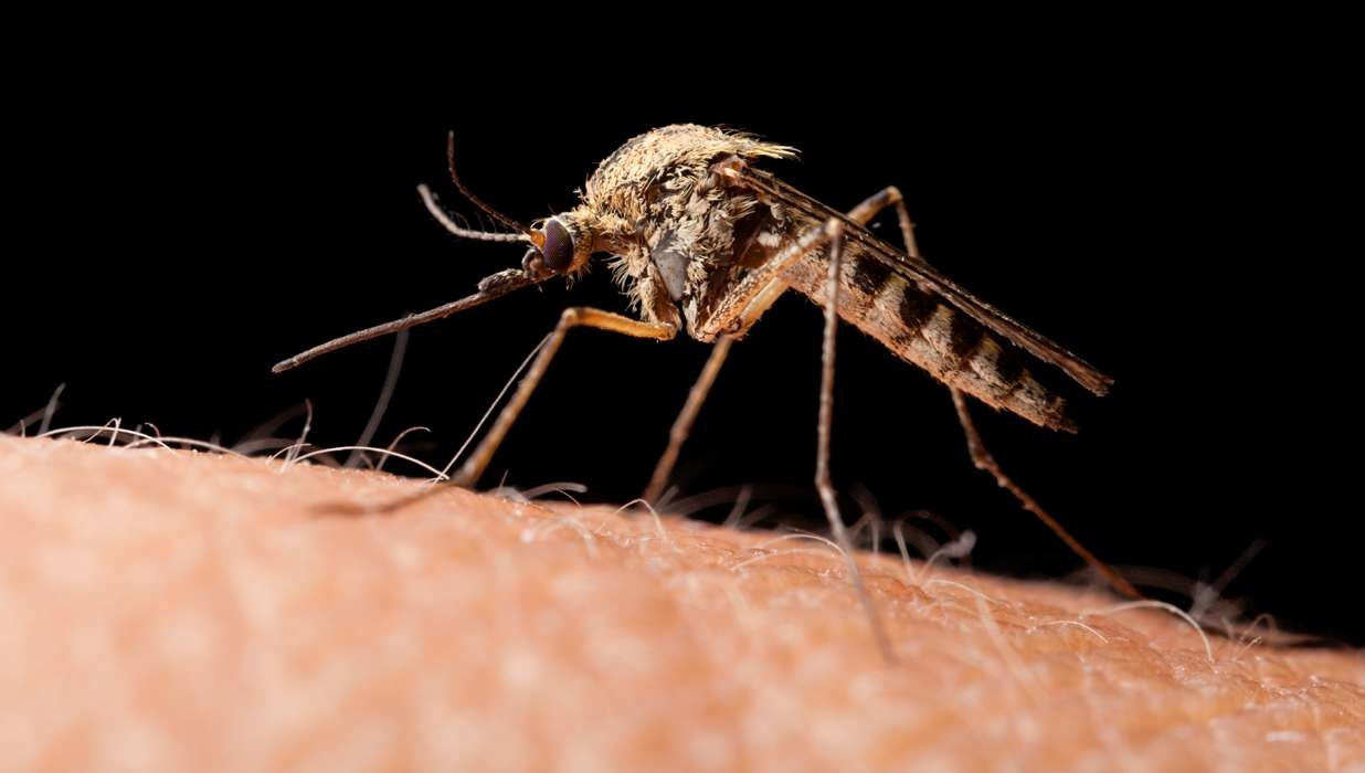 Florida Teen First Human Case of Another Mosquito-Borne Virus