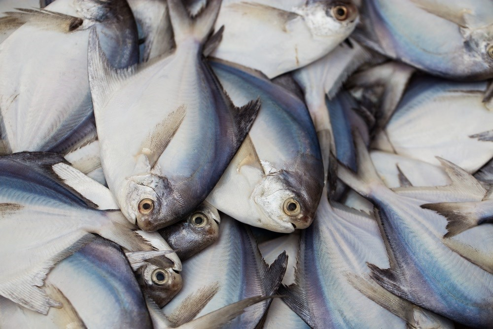 FDA, EPA Issues New Guidance on Fish Consumption
