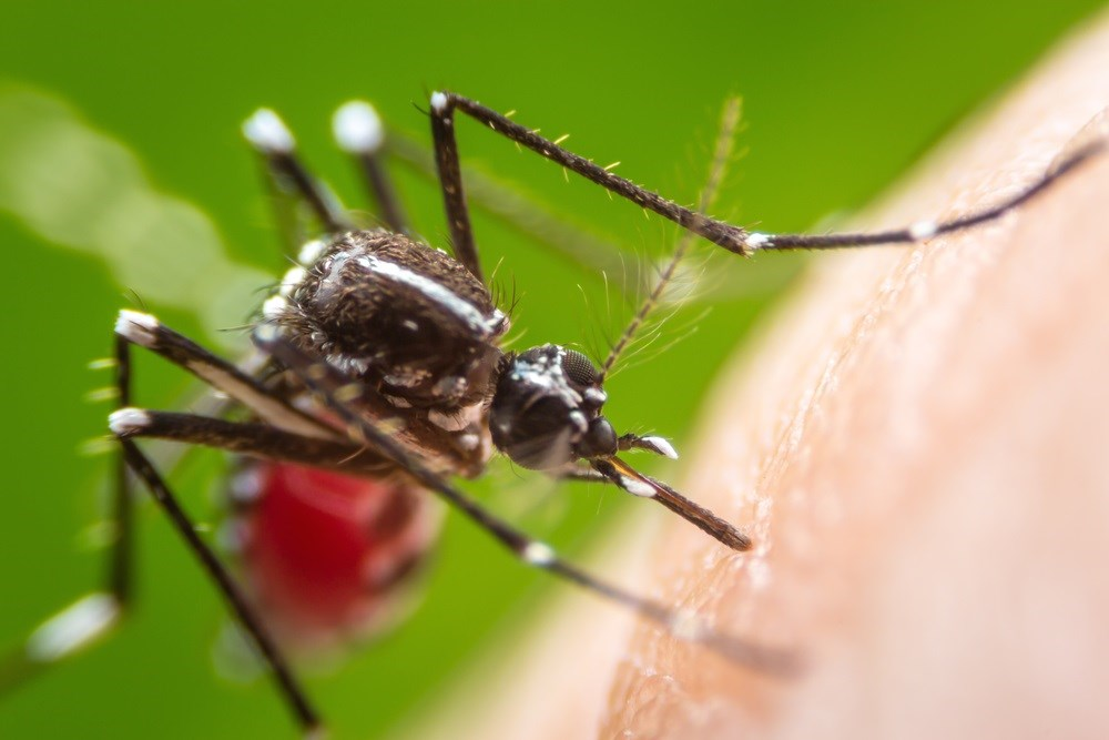 Zika-Carrying Mosquitoes Found in More US Counties, CDC Reports