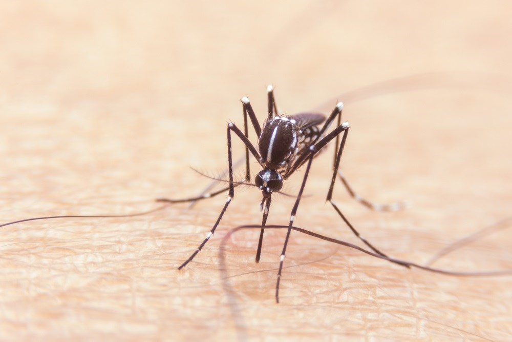 10% of US Zika-Positive Pregnancies Associated with Birth Defects