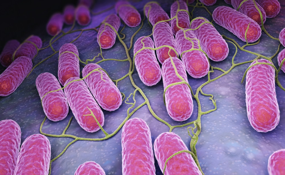 salmonella infection rates decreased in 2016 says cdc