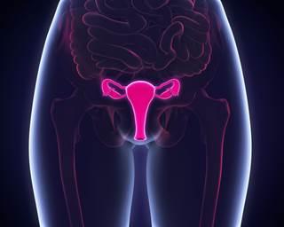 Absolute uterine factor infertility affects approximately 1.5 million women worldwide.
