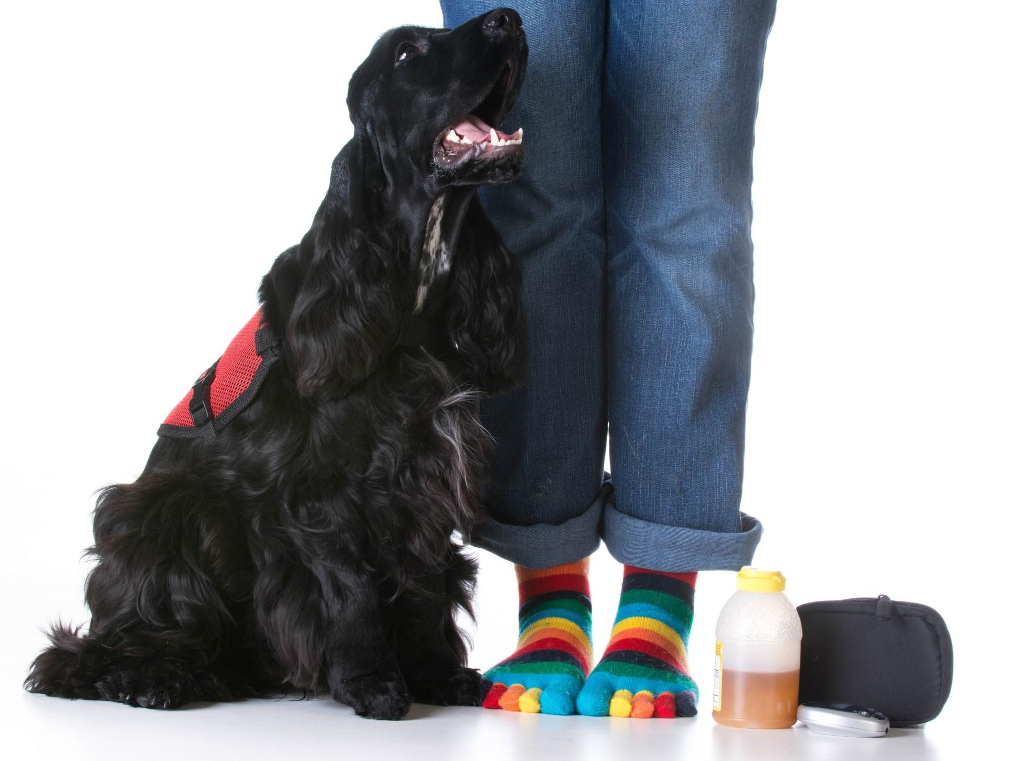 Trained Alert Dogs Can Detect Impending T1D-Related Events